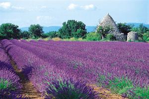 I.S. – Aix-en-Provence
